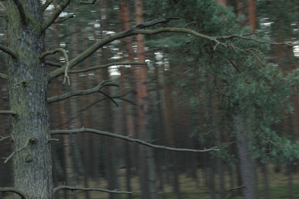 poland8